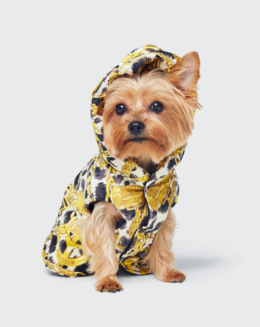 Réjouissez-vous amis canins, avant le lancement de sa collection capsule Moschino x H&M pour humains, Jeremy Scott va faire de vous des bêtes de mode.